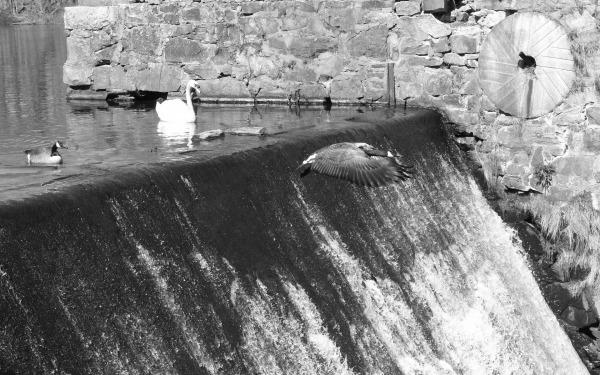 Falls at Barny Pond