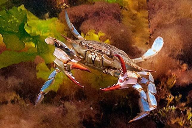 http://www.laptewproductions.com/videos/wp-content/uploads/2012/04/DSC9800sunrise-dive2-1.jpg