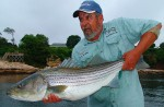 Captain Jim White with a nice striper being released