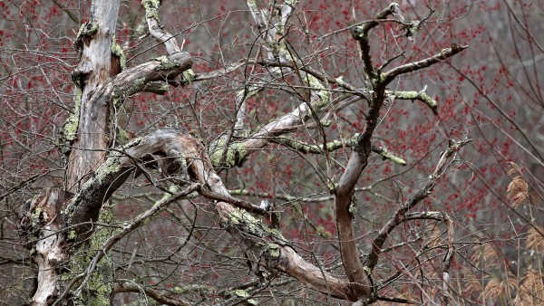 New England's trees budding early during a warm spring